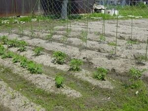 夢の農園の活動の様子3-2